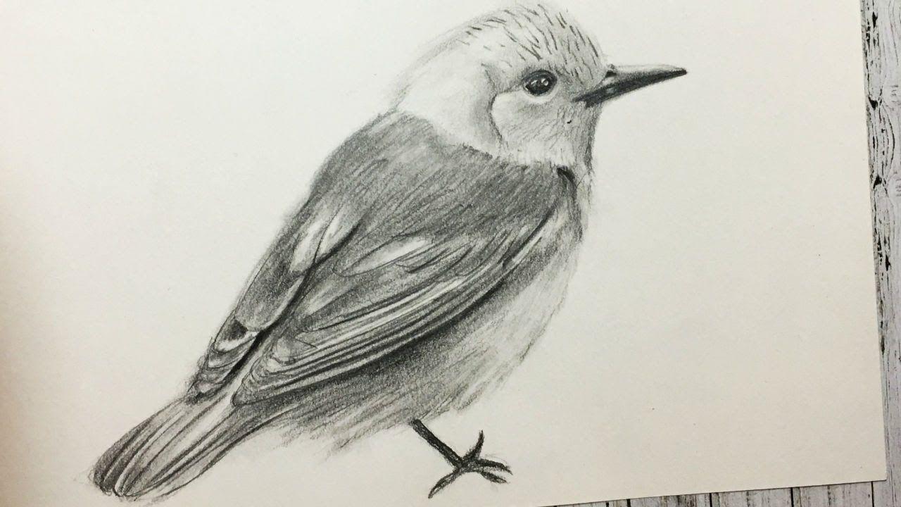 Cómo Dibujar Un Pájaro Realista Paso A Paso Fácil Y Rápido How To Dr Dibujos De Pájaro Cómo Dibujar Aves Pajarito Dibujo