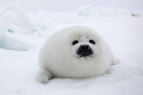 Baby seal!