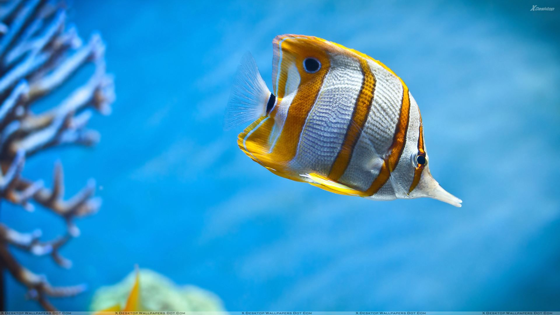 Explore Fish Wallpaper, Tank Wallpaper, And More