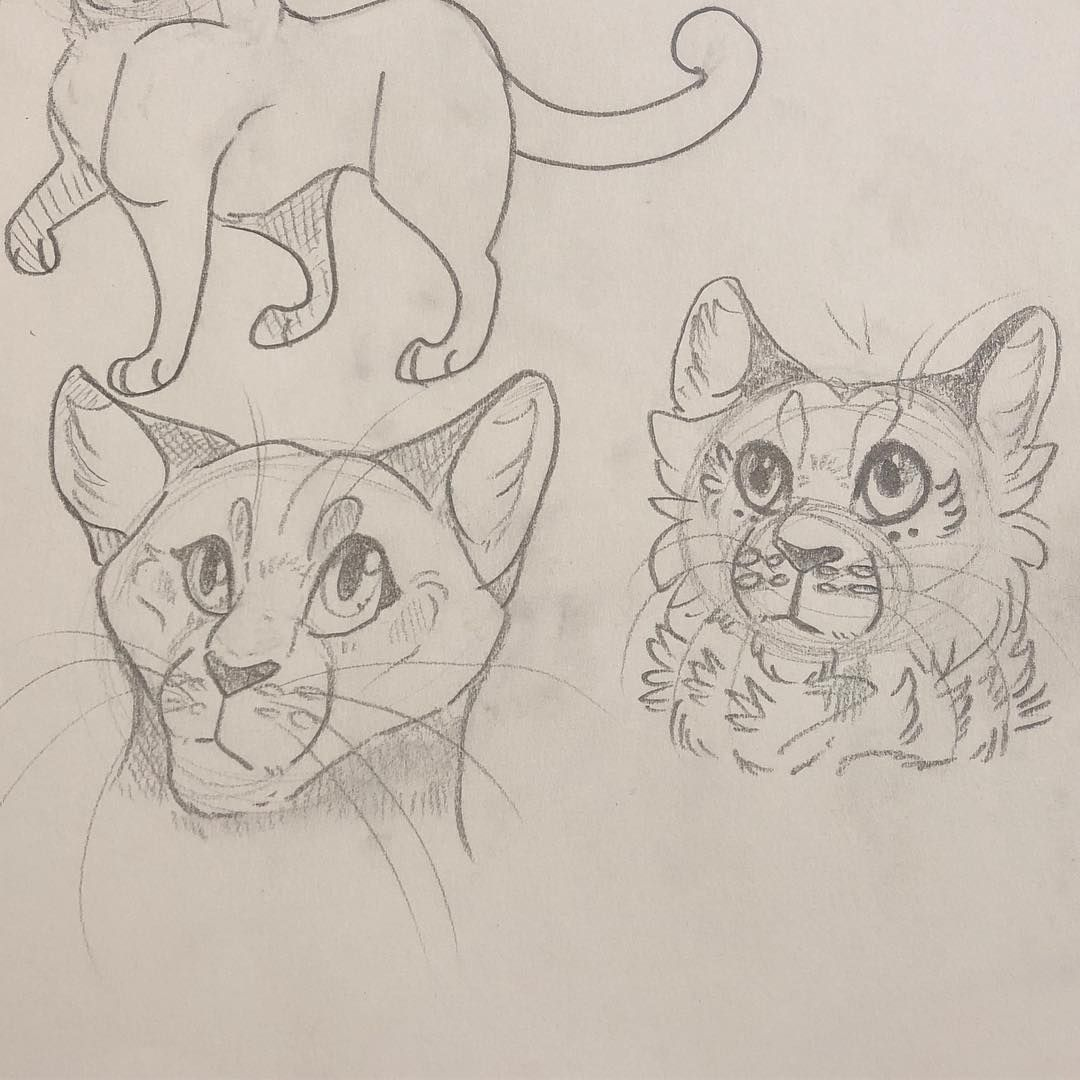 The 10 Best Today On Warrior Cat Drawings Warrior Cats Cat Drawing