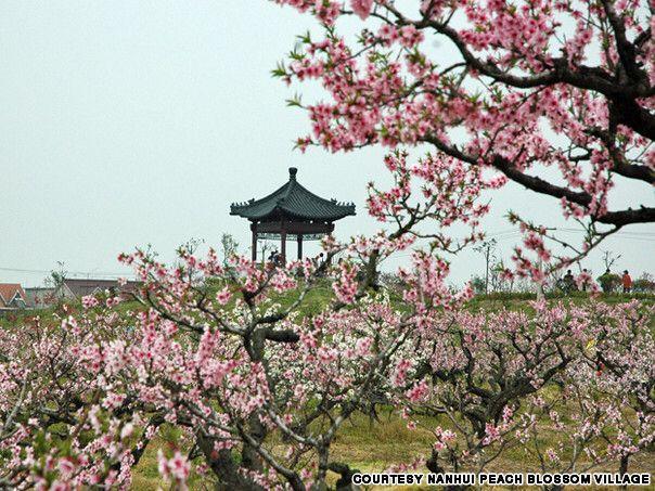 Nanhui Peach Blossom Village Is The Biggest Peach Blossom Garden In Shanghai And Hosts The City S Annual Peach Blossom Blossom Garden Peach Blossoms Shanghai