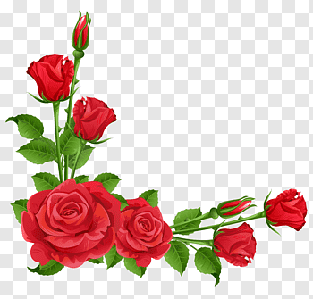 Flower Garden Perennial Plant Pixabay Red Roses Red Roses Frame Free Png Floral Illustration Free Flower Illustration Pink Floral Painting