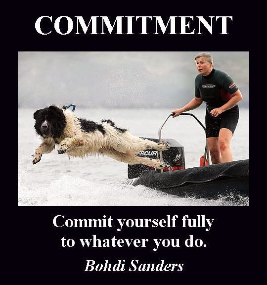 commit Working dogs, Dogs, Search, rescue dogs