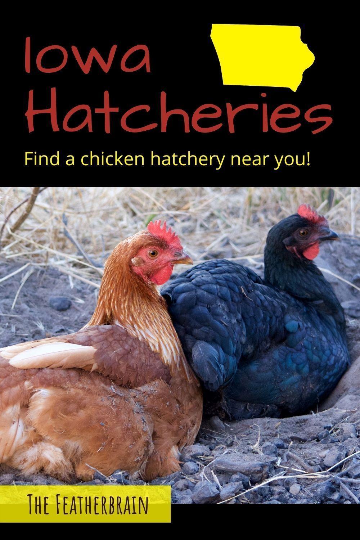 Chicken Hatcheries in Iowa