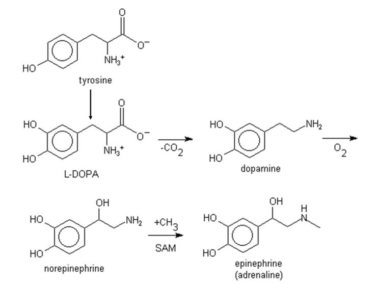 Amino Acids: Chemistry, Biochemistry & Nutrition