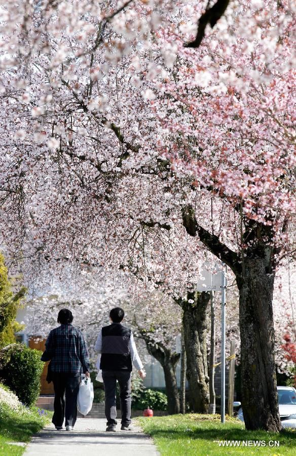 Spring Blossom Around World China Org Cn The Colour Of Spring Spring Time World