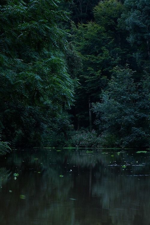 In The Forest Of Forgetting   Dark green aesthetic, Green ...