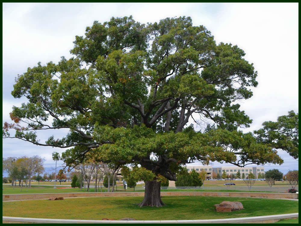 Pin On I Love Trees