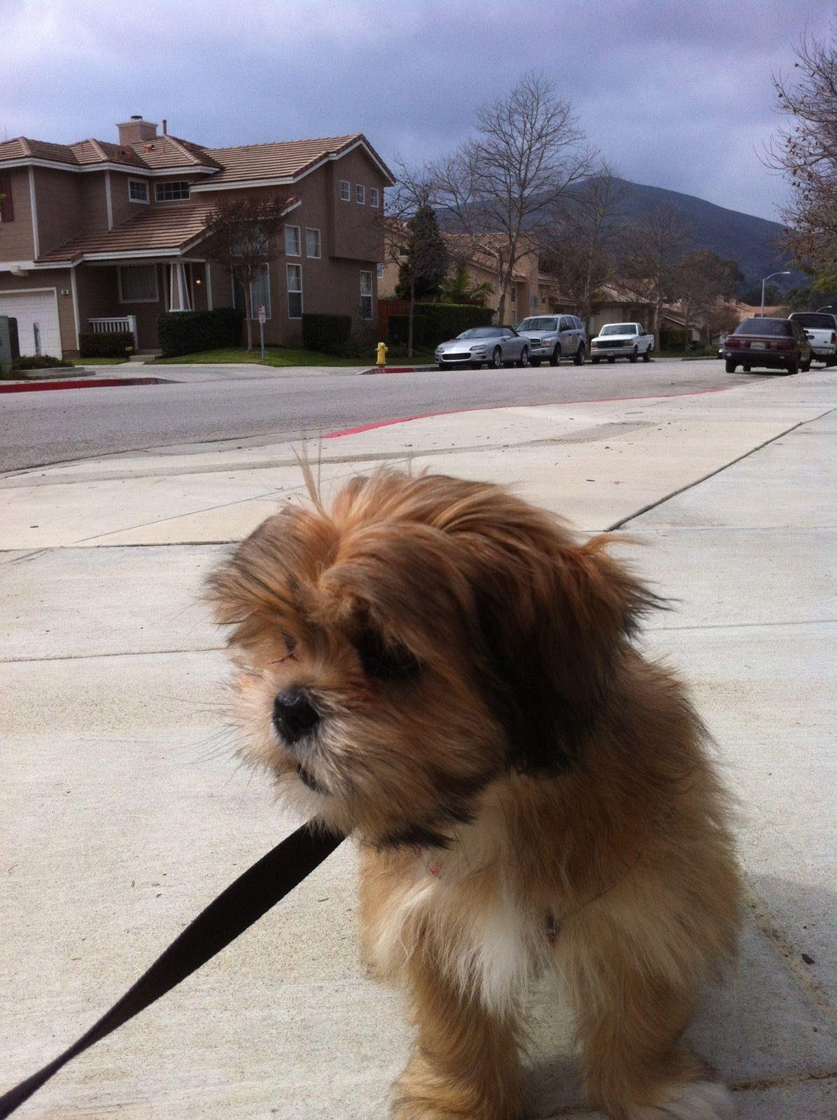 I Love Lhasa Apsos cute pet Baby Bib
