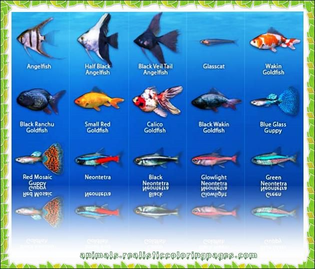 List Of Freshwater Fish Based On Alphabet From A To Z With Pictures