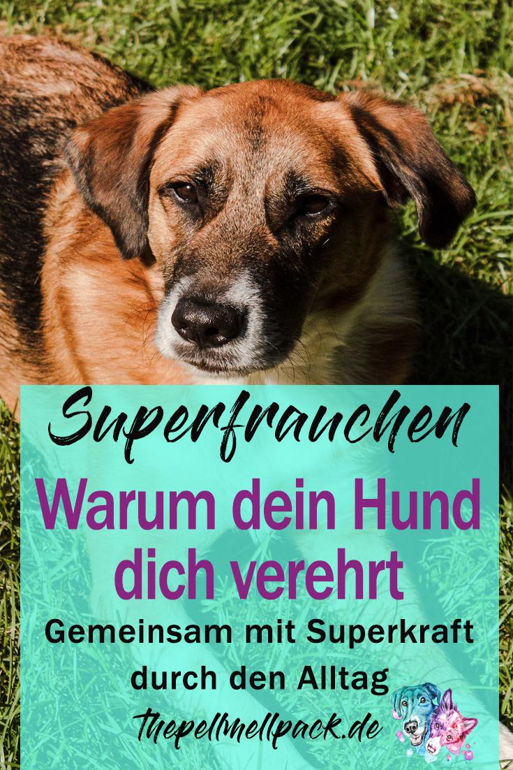 The Marvelous Mr Enkman And Magic Mum The Pell Mell Pack Hundeerziehung Hunde Tierschutz Hunde