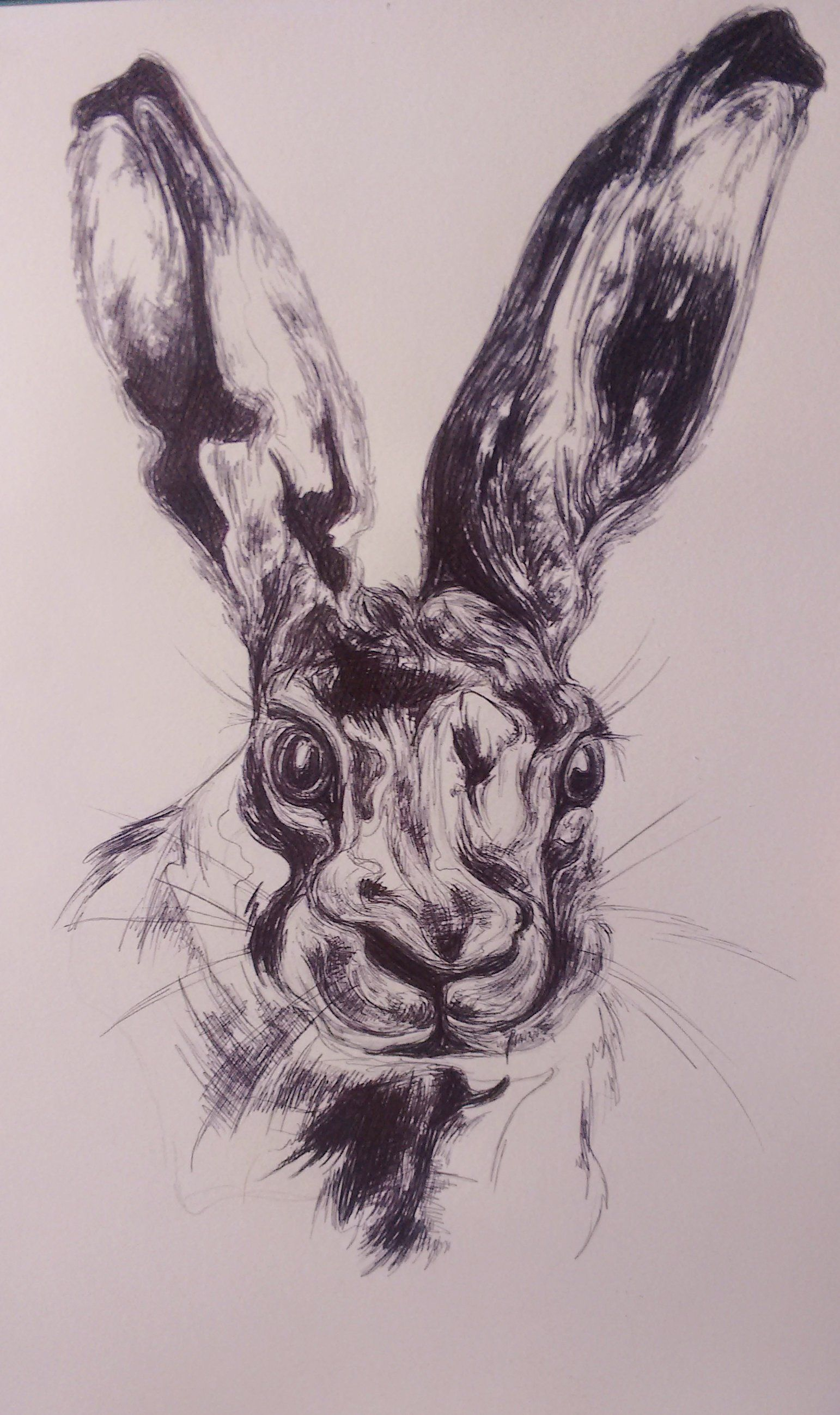 pretty hare, sketch in biro. To commission a piece visit my website, www.katiemonton.com