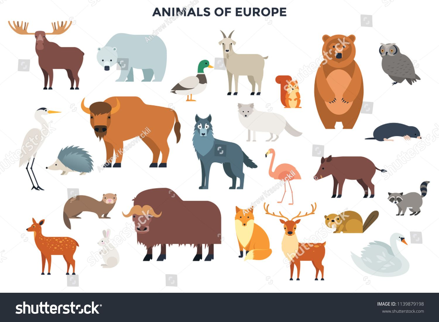 Big Collection Of Cute Funny Wild European Animals And Birds Bundle Of Adorable Cartoon Characters Isolated On White B Pet Birds Cartoon Animals Animal Design