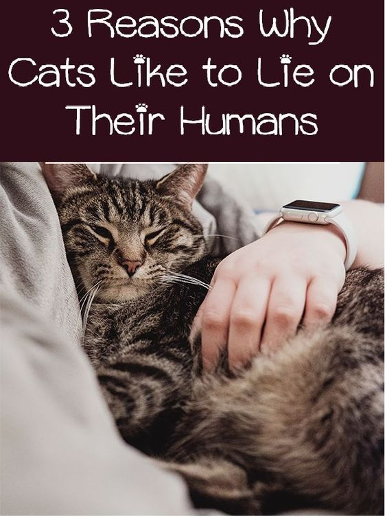 Find Out The Secret Behind The Cat Behavior That Drives Some Kitties To Lay On Their People All The Time Cats Catbehavior In 2020 Cat Behavior Cat Health Cat Facts