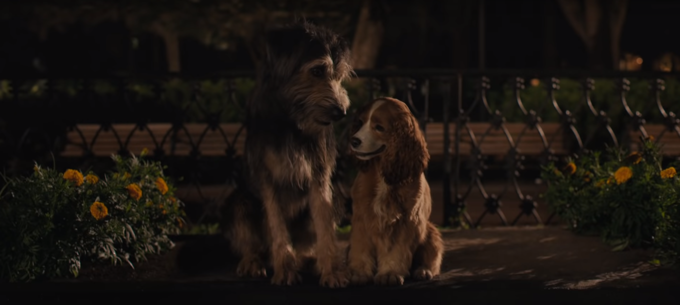 Lady And The Tramp 2019 Photo Lady And The Tramp Tramps Movie Disney Dogs