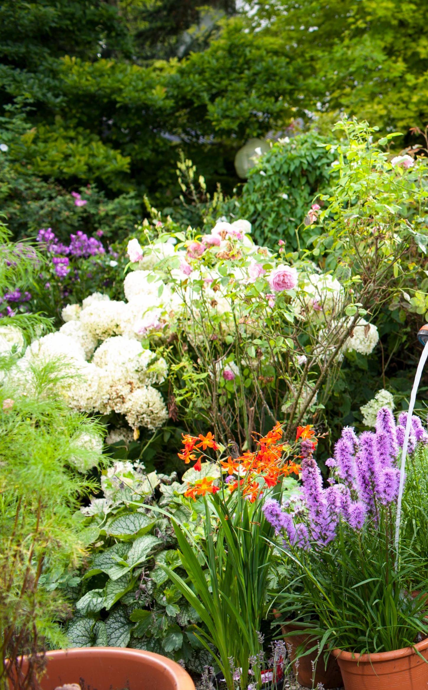 Épinglé sur Planter et replanter