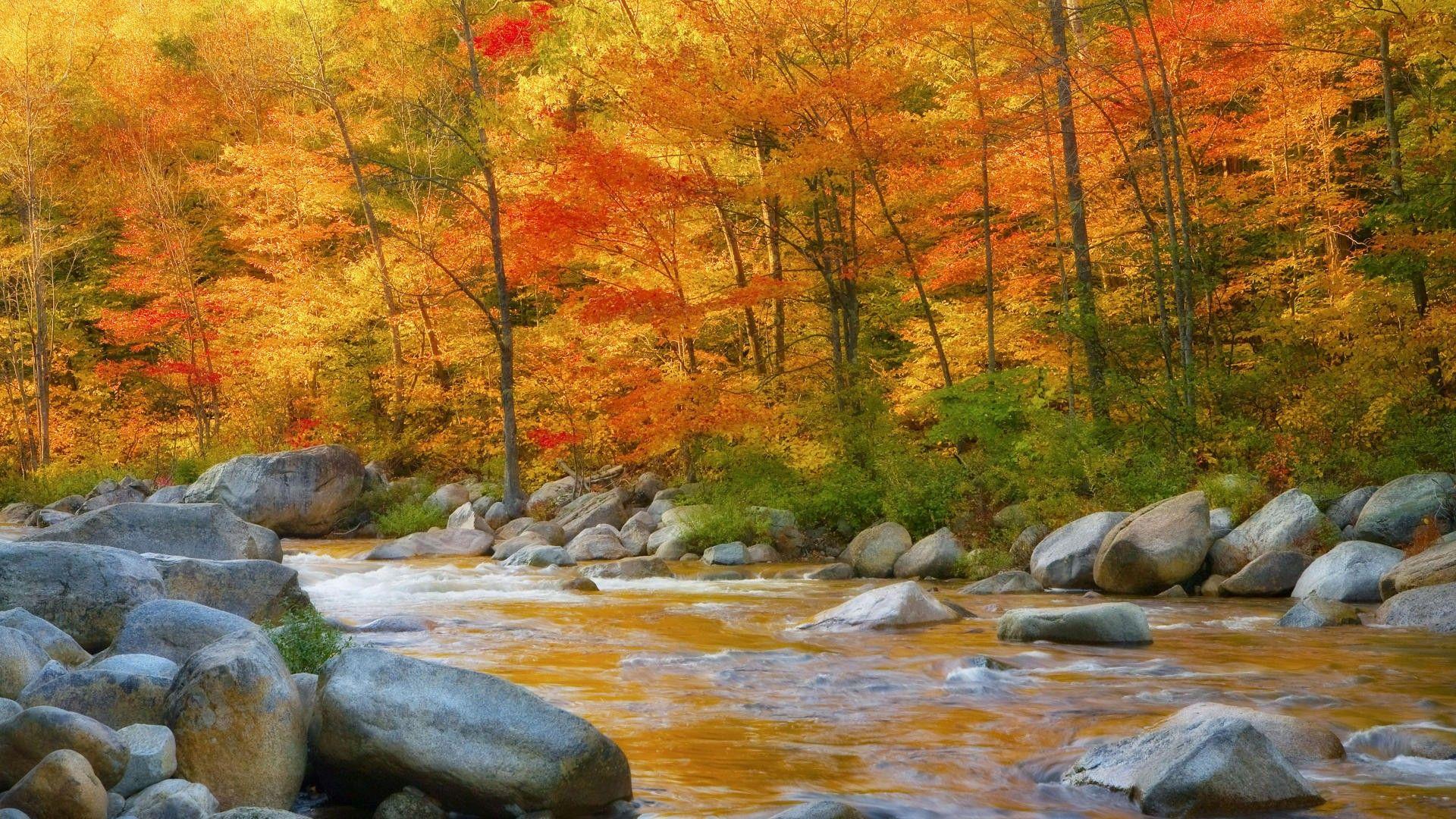 Autumn Pumpkin Wallpaper Widescreen