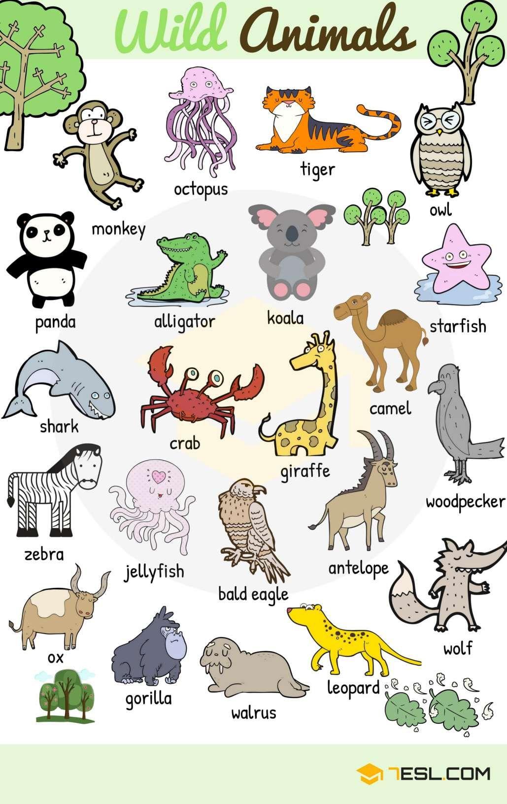 Learn Animal Names In English Teaching English Ingleses Ensino De Ingles E Aulas De Ingles