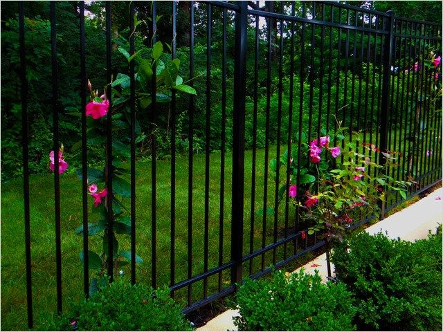 40 Best and Beautiful Climbing Flowers for Fences Ideas Outdoor