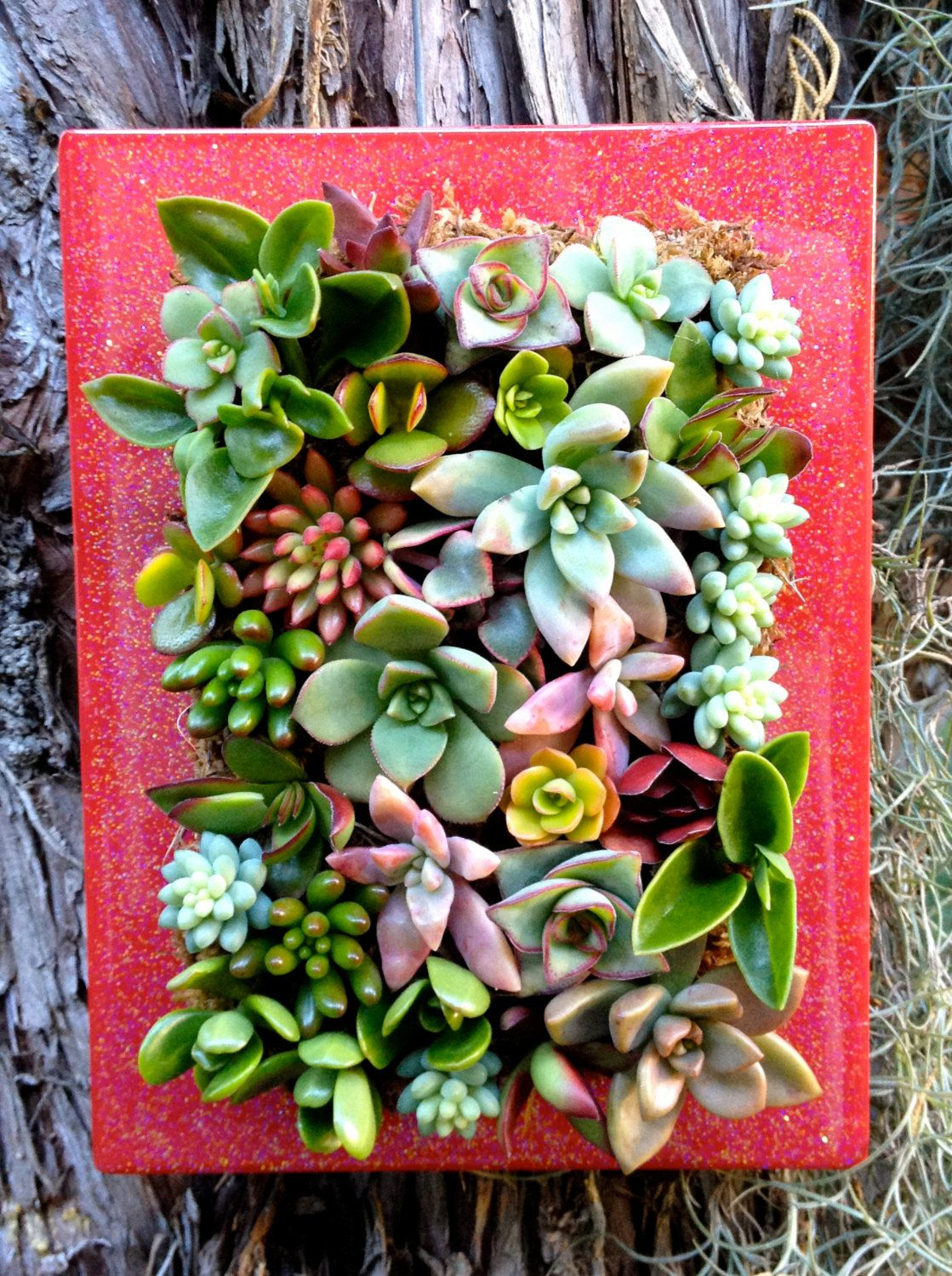 Vertical Living Succulent Wall Hanging Or Table Top In Red Frame. $35.00,  Via Etsy