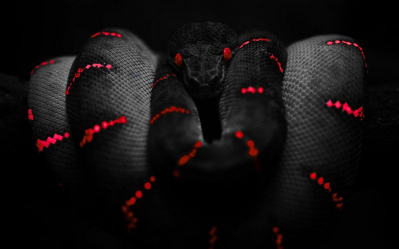 Like Us On Facebook 1764 Snake Wallpaper Red And Black Wallpaper Red And Black Snake