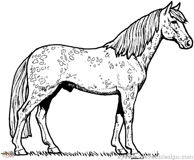 horse ausmalbilder pferde dressur  ausmalbilder pferde