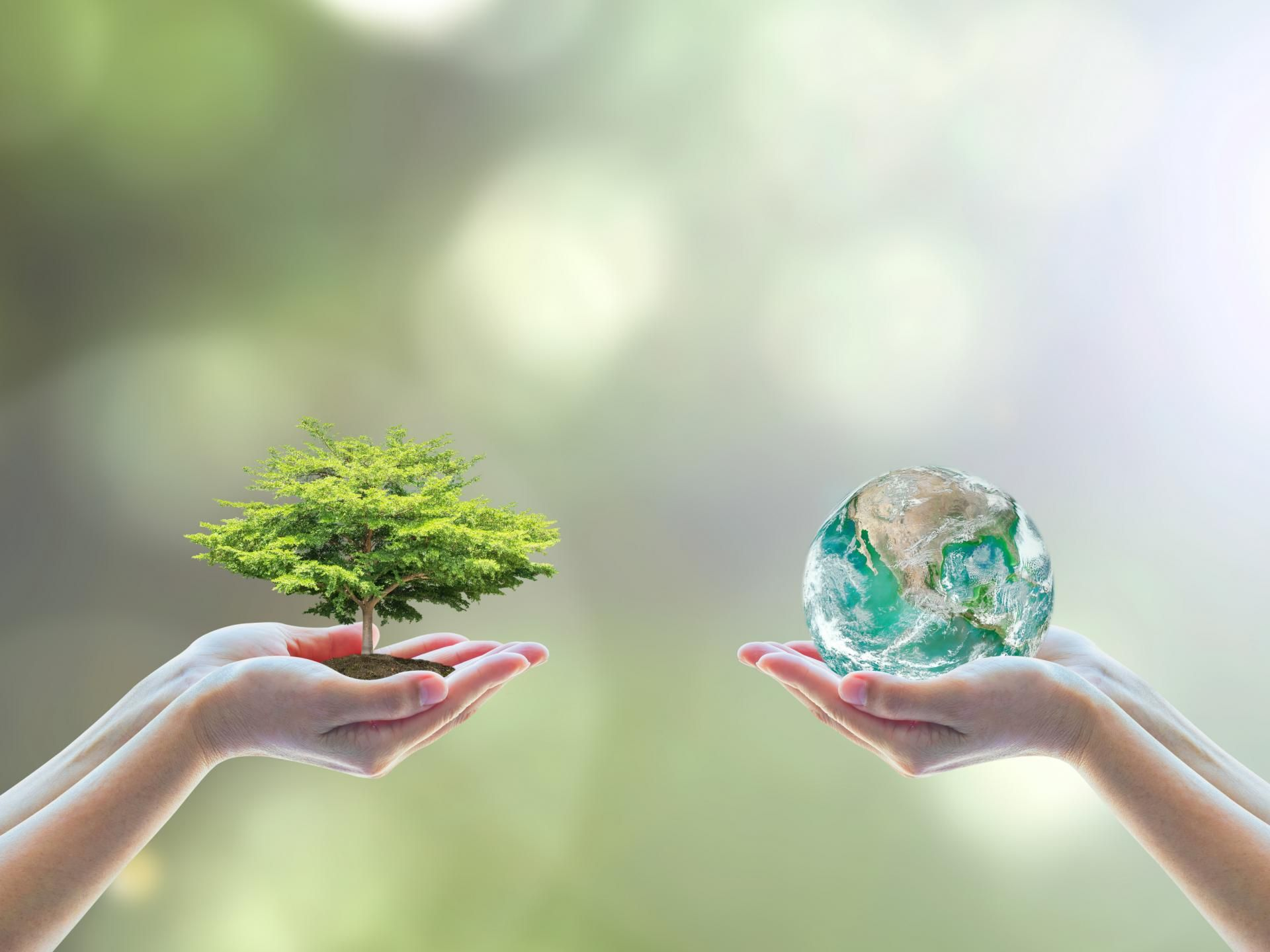 We do not inherit the earth from our ancestors, we borrow