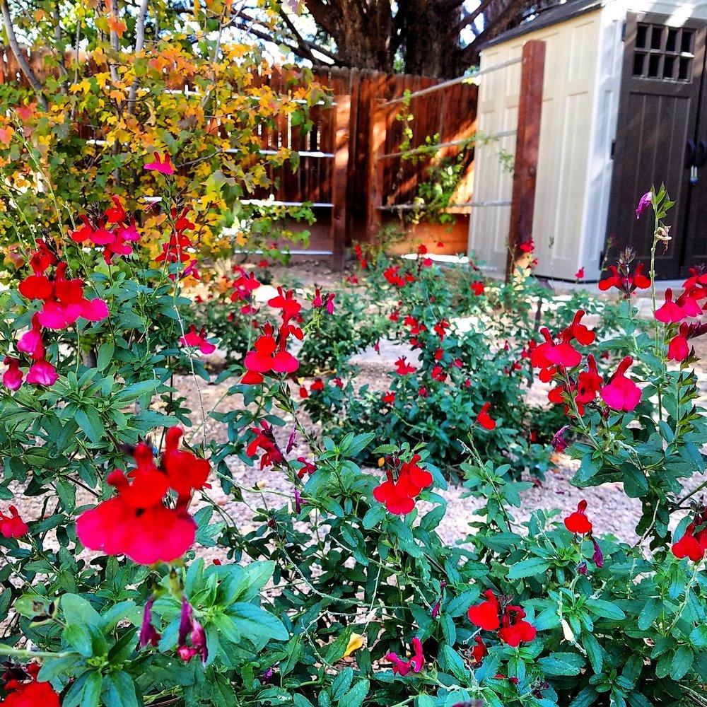 Southwest Horticulture Albuquerque Landscaping Experts Plants Of The Southwest Horticulture Landscape Design