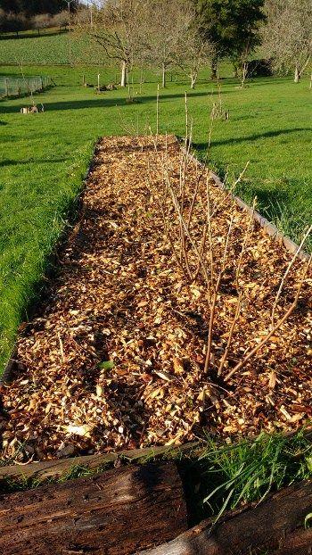 BRF et petits fruits rouges - Cu0027est quoi le BRF? Comment lu0027utiliser - Ou Trouver De La Terre De Jardin