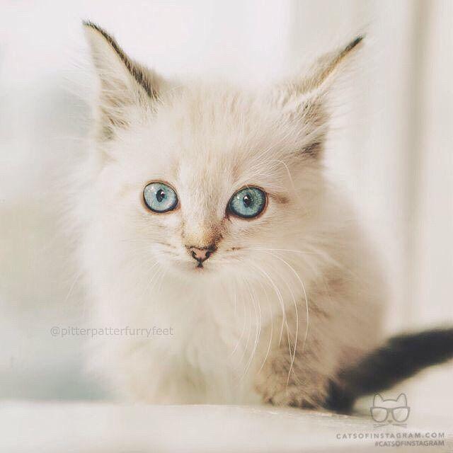 "From hollysisson ""Baby boy kitten Finnegan! Who knew he"
