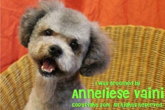 Kawaii Style Dog Grooming By Anneliese Vaini At Chetek Veterinary Clinic In Chetek Wi Dog Salon Dog Grooming Dogs