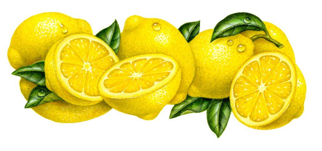 https://foodartist.files.wordpress.com/2010/12/lemon.jpg