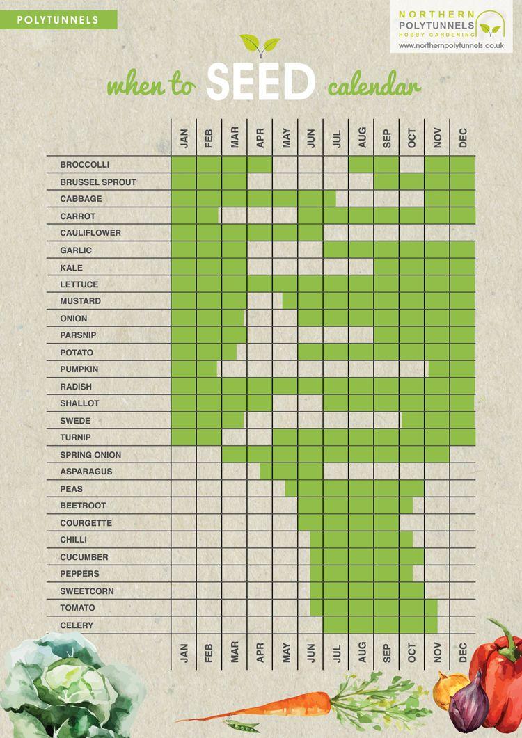 When to seed calendar an easy guide to show when to for Vegetable garden calendar
