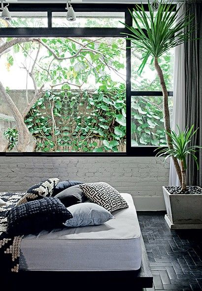 Bedroom with Dracena plant