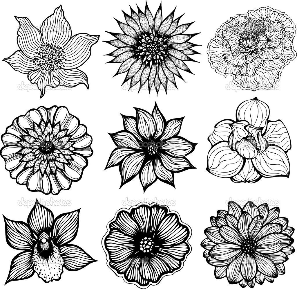 black and white pictures of flowers to print free Google Search Drawing