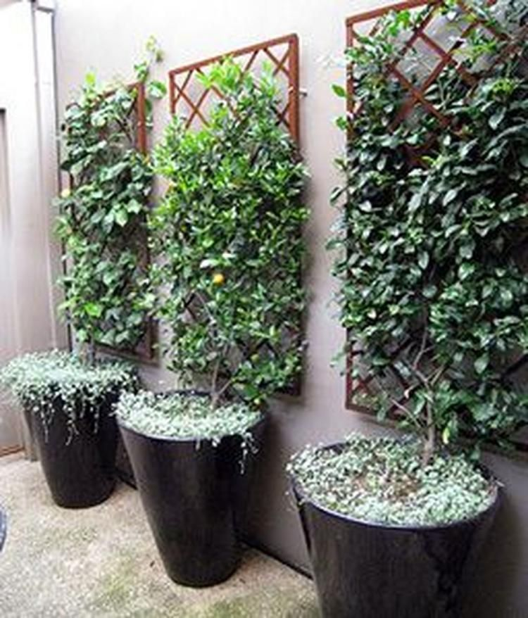 Gorgeous Small Courtyard ideas on A Budget | garden ... on Courtyard Ideas On A Budget id=32212
