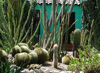 Fairy Yardmother Front Yards Cacti And Succulents Cacti And