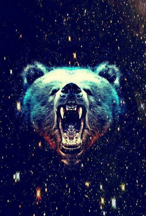 Hipster Bear Wallpaper Wallpaper Pinterest Bear Wallpaper