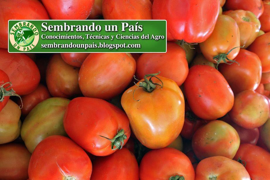 19 Ideas De Agricultura Agricultura Urbana Agricultura Siembras