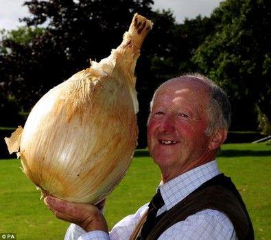 World's record onion