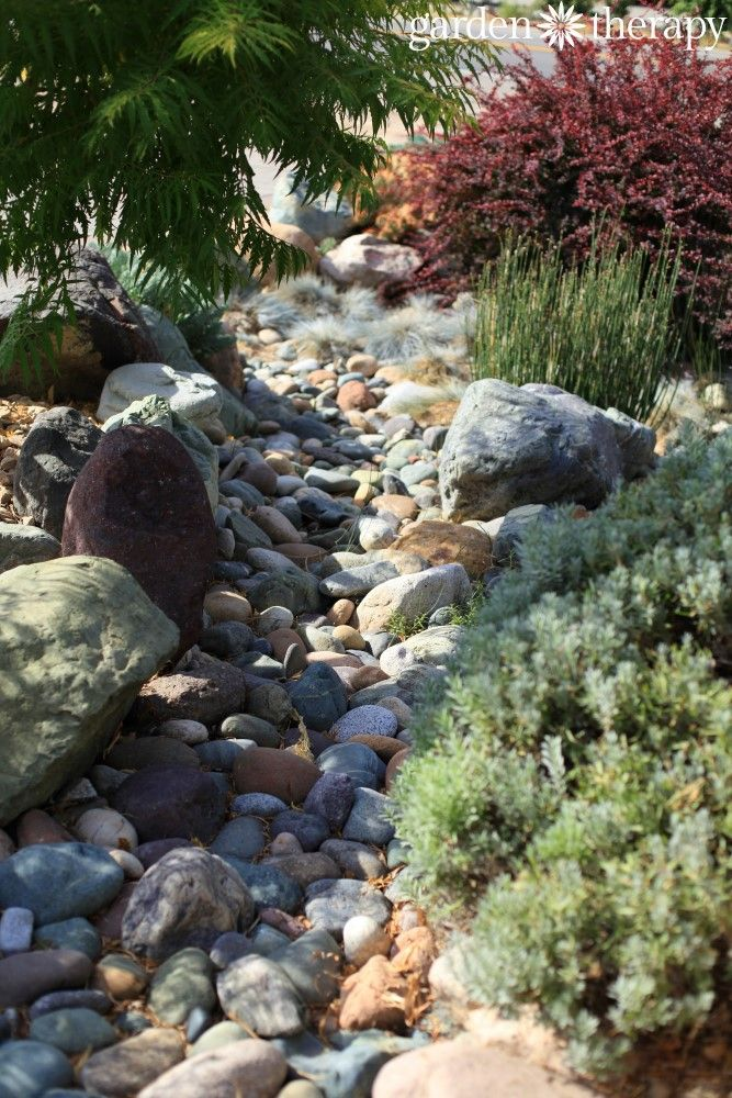 Landscaping for drought inspiring gardens that save water for Dry landscape design