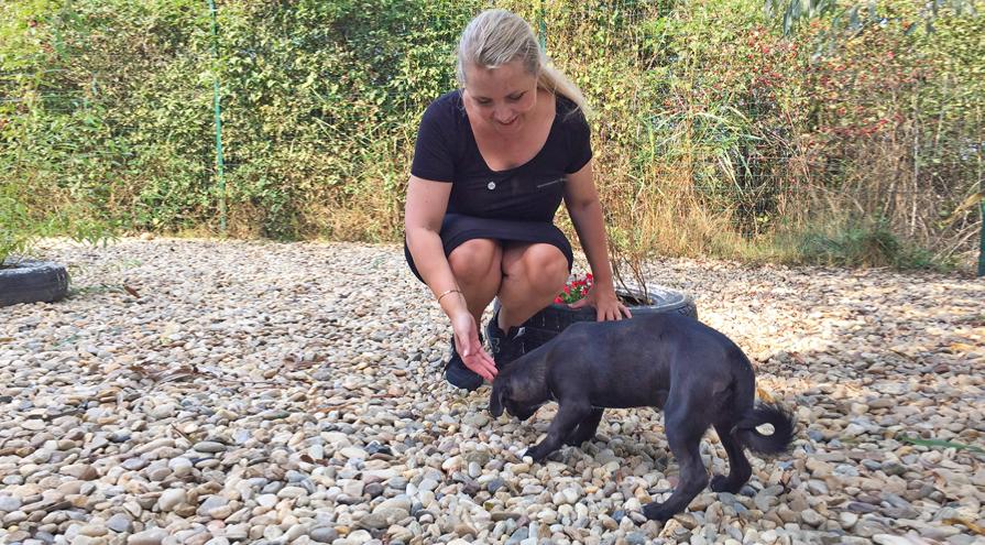Slut med hundedrab i Constanța, Rumænien | World Animal Protection Danmark