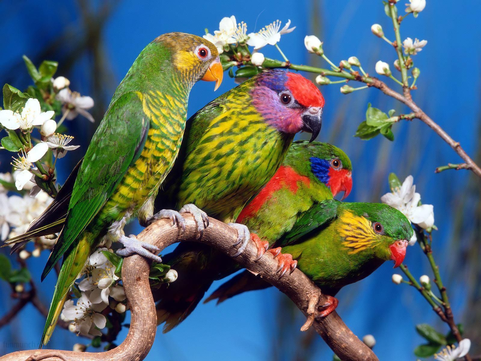 wallpapers love birds - wallpaper cave | photography outdoor nature
