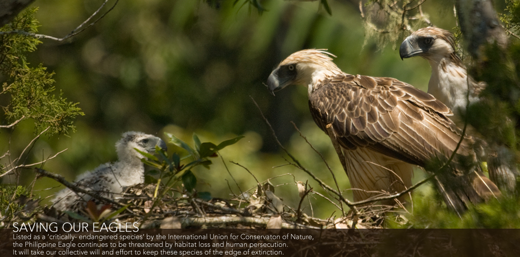Homepage - Philippine Eagle Foundation - The official website of ...