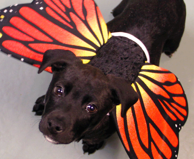 halloween safety tips Pet safe, Halloween safety, Pets