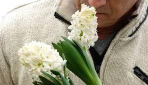 Afbeeldingsresultaat voor voorjaarsbloemen soorten
