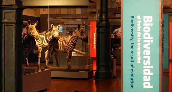 Exposición permanente - Biodiversidad