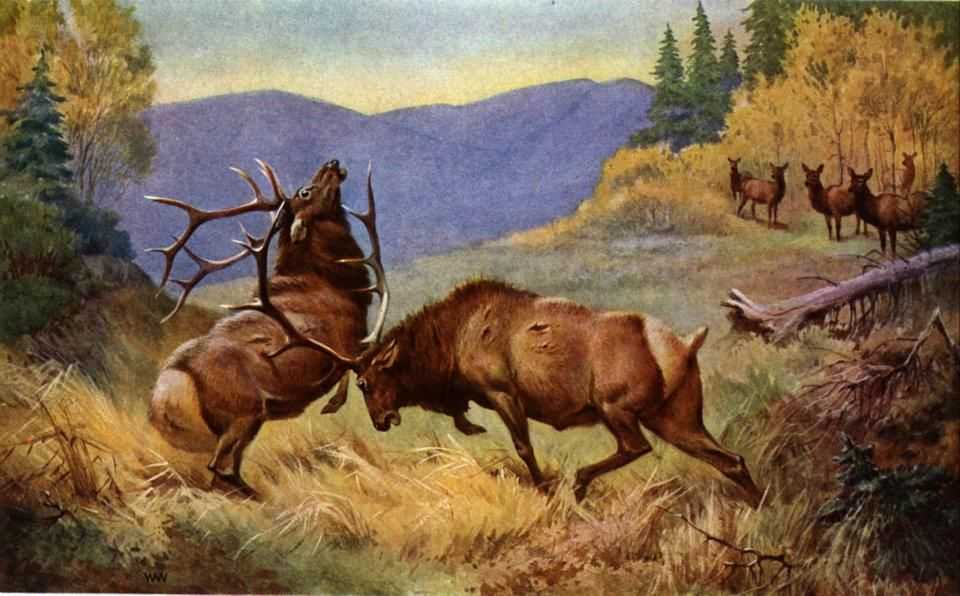 Wildlife Art, Nature Hunt, Elk