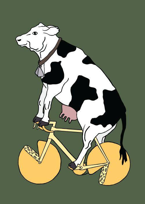Een fietsende koe op voedsel, namelijk kaas. Meer over voeding en sport? Ga naar: http://www.milkstory.nl/artikel/voedingsgeheimen-van-een-topsporter-gunilla-boomsma
