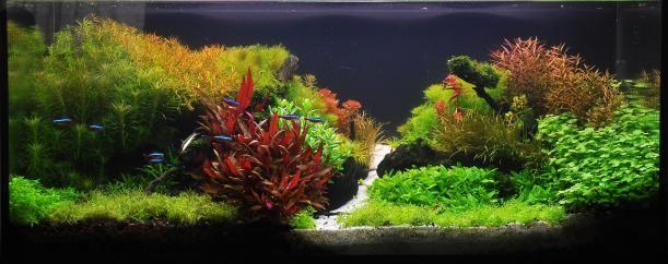 http://www.aquagoin.com/signup